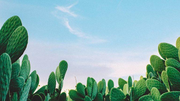 cactus on skin